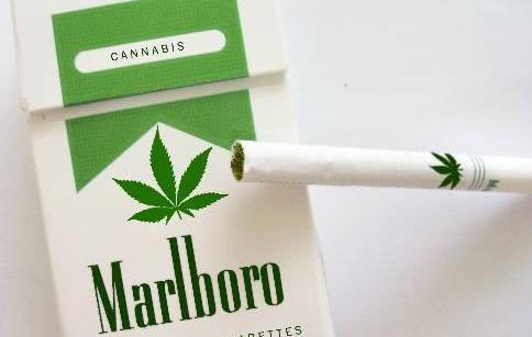marijuana3.jpg