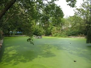 algae-300x225.jpg