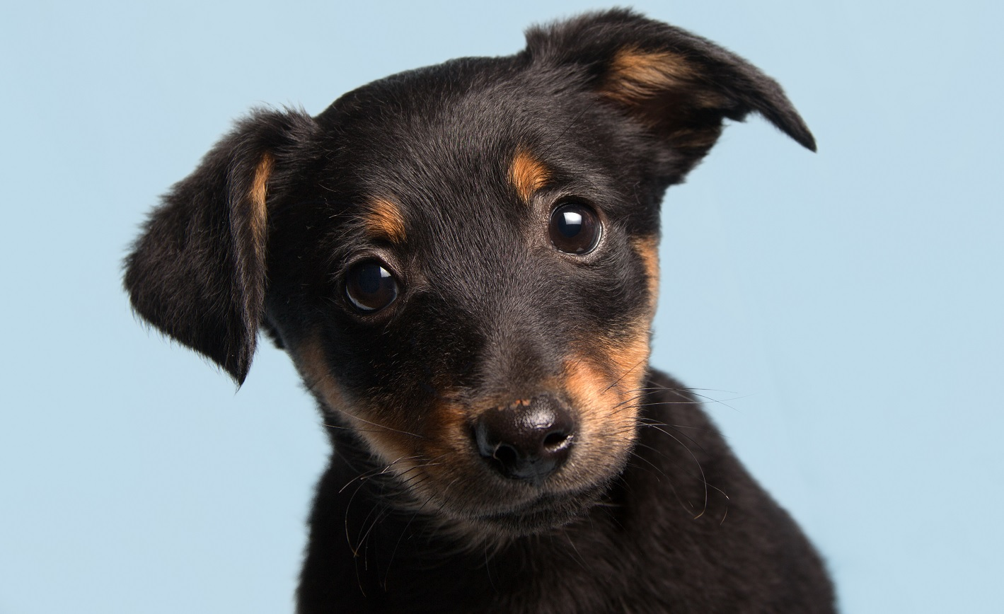 puppy_sized