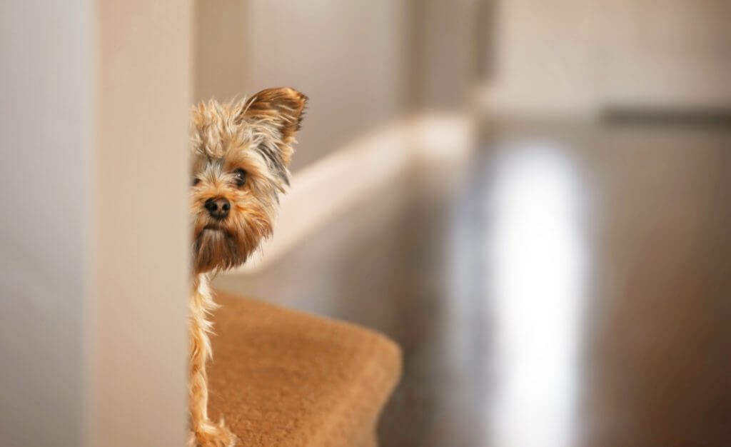 Loud fireworks are terrifying your pet  Can the law help